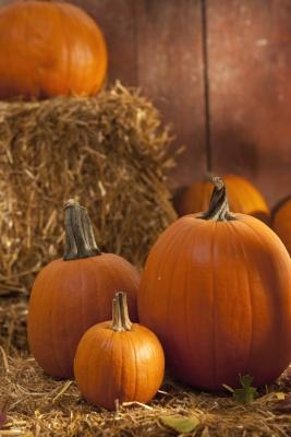 Comment faire Big Pumpkin catapultes
