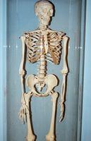 Liste des fonctions du système Skeletal