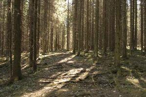 Comment un Biotic facteur de la forêt utilise l'un des facteurs abiotiques