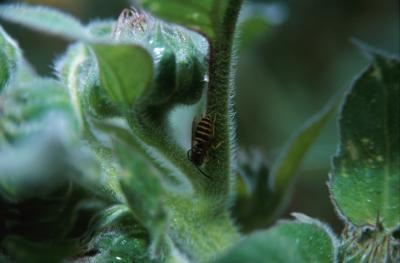 Comment identifier les insectes volants dans les bois