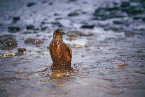 Quelles sont les causes des catastrophes pétrolières: Manque de forage peu profond?
