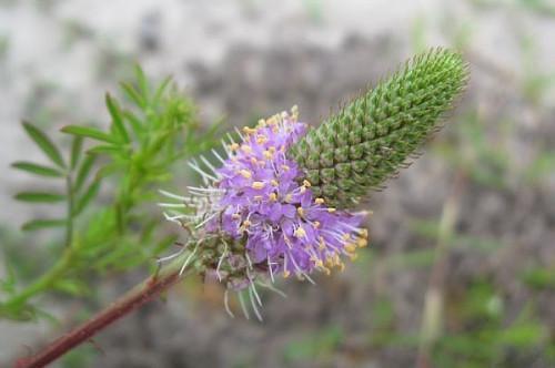 Comment identifier Floride Wildflowers