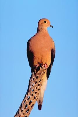 Birds of the Konza Prairie