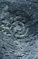 Quels sont les différents types de fossiles sont-ils?