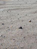 Comment séparer Sulfate de Cuivre & Sand