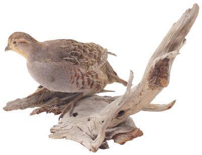 Comment préparer Skins aviaires