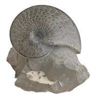 Types de fossiles trouvés dans les Appalaches