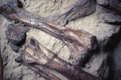 Californie Dinosaur Fossil Egg Informations