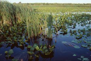Facteurs abiotiques dans les zones humides naturelles