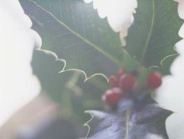 Mistletoe Crafts for Kids