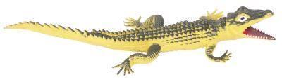 Livres pour enfants A propos de Alligators & crocodiles