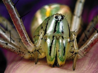 Comment identifier les araignées par leurs caractéristiques