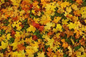 Jeux de la maternelle avec un Leaves Thème