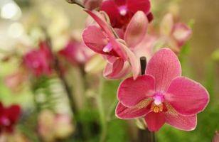 Comment faire un Cascading Orchid bouquet de mariée