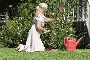 Cadeaux d'anniversaire pour les jardiniers