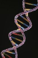 Avantages et inconvénients de la technologie de l'ADN recombinant
