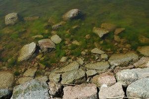 Comment mesurer la croissance des algues