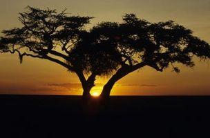 Quels types d'arbres se trouvent dans Grassland biomes?