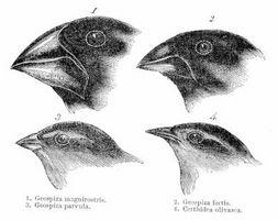 Différence entre biologique et sociale Evolution