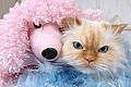 Comment trouver des modèles Pet Apparel Couture