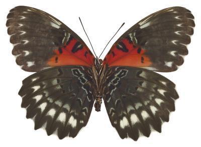 Façons de préserver un papillon