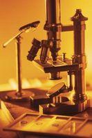 L'utilisation de microscopes composés dans le domaine de la biologie