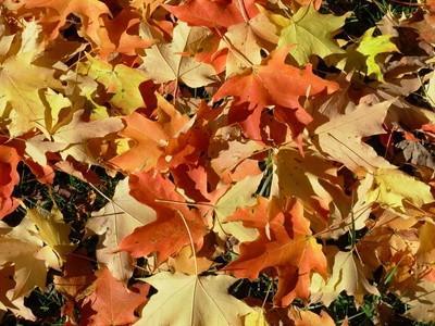 Idées Église Bulletin Board pour Thanksgiving