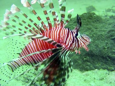 Poisson de mer et parasites