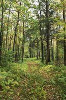 Comment se frayer un chemin à pied à travers les bois