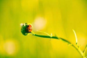 Comment faire pour trouver des insectes Collectionneurs