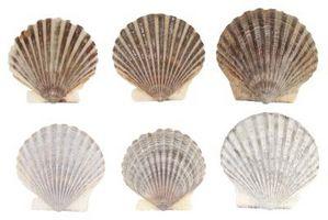 Océan ou mer Thèmes & Activités pour enfants d'âge préscolaire