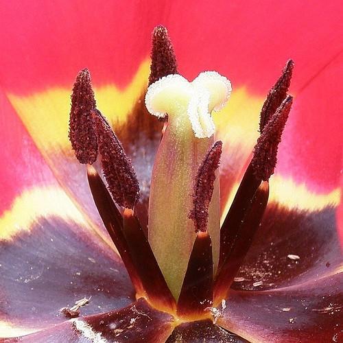 Les parties de la fleur et Pollinisation