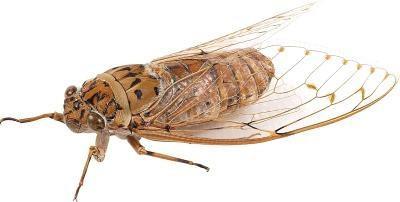Bugs qui jettent leurs corps