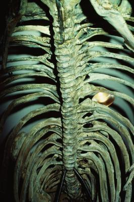 Les quatre types de Fossiles