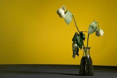 Roses comme cadeaux