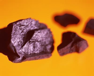 Paléobotanique Types de Fossiles