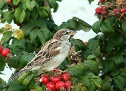 Maison Sparrow Diet