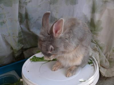 Comment faire pour contrôler les niveaux d'ammoniac dans Rabbitry Indoor
