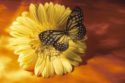 Comment monter un papillon dans un Shadow Box