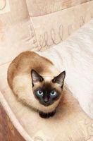 Cadeaux pour des amants de chat siamois