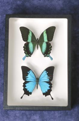 Comment à l'image d'un Moth et papillon
