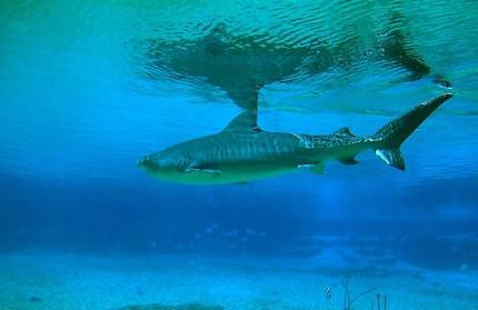 Dents de requin d'information