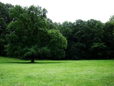 Quels sont sept terres biomes?
