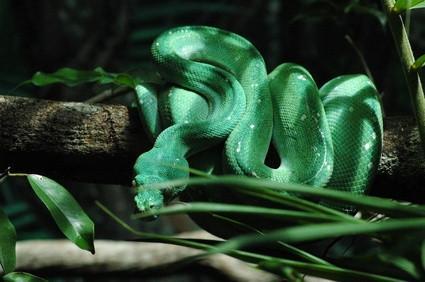Comment faire pour déterminer le type de Python Serpent