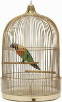 Quelles sont les causes des oiseaux à arracher Shaft de plumes Lorsque Mue?