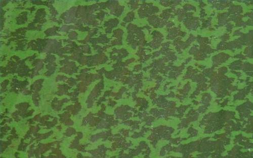 Quelles sont les causes des algues dans les étangs?