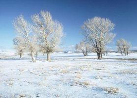 Battre les blues de l'hiver dans l'enfance