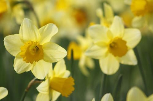 Quels sont les fleurs du mois?