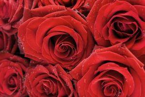 Idées pour les douches de mariage Utilisation de la couleur rouge