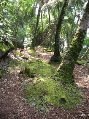 Comment protéger l'Amazonie